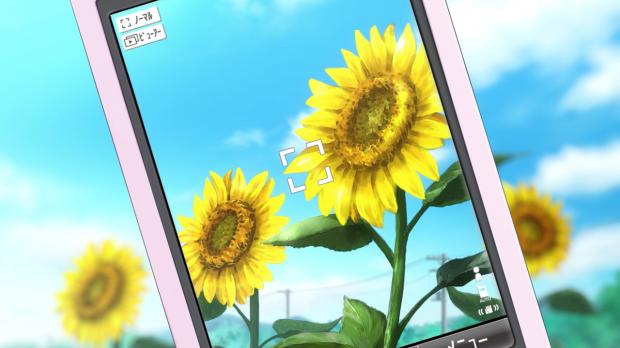 sunflowerpicture
